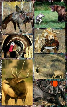 f534462dd82 134 Best Hunting images