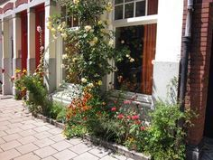 Beste planten voor in een geveltuin | Tuin en Balkon Planten die aantrekkelijk zijn voor vlinders, hommels of vogels