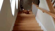 Images of the week -121 pics- Dog Climb Stairs Backwards (Gif)