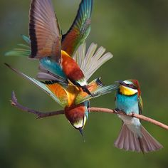 Photograph Air attack by Tibor Jantyik on 500px