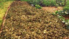 Gemüsegarten anlegen ohne Umgraben