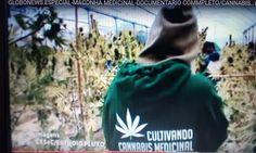 MACONHA MEDICINAL-GLOBONEWS ESPECIAL-DOCUMENTÁRIO COMPLETO-GOSTOU! COMPA...