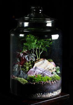Large Jar Forest Terrarium by joshleo, via Flickr