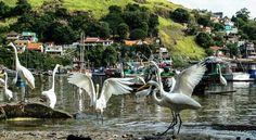 Herons around boats- Jurujuba