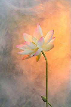 Si lloras por haber perdido el sol, las lágrimas no te dejarán ver las estrellas. Rabindranath Tagore .. Buenas noches queridos amigos ... If you cry over losing the sun, the tears will not let you see the stars. Rabindranath Tagore.. Good night dear friends ...