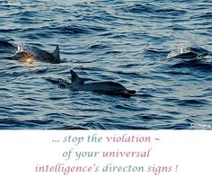 ... stop the #violation ~ of your #universal_intelligence's directon #signs ! ( #Samara )