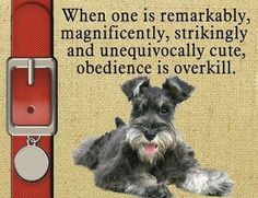 Miniature Schnauzer Dog Magnet Obedience Is Overkill Personalized on Tag | eBay