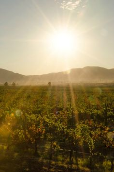 Sunset in the Valle de Guadalupe, Mexico. Baja California wine country.