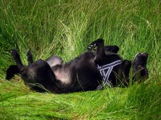 """""""So relaxing!"""" """"Mmmm che relax""""!"""