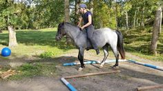 Third time with a rider and already TREC obstacles with Ullekalvs Antea