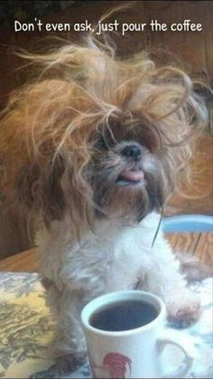 Funny animal pictures of the day - Wackyy Picdump 11 photos) # . - Funny Animal Pictures of the Day – Wackyy Picdump 11 photos) # animals - Funny Animal Jokes, Funny Animal Photos, Funny Dog Memes, Really Funny Memes, Cute Funny Animals, Funny Animal Pictures, Funny Cute, Funny Dogs, Cat Memes