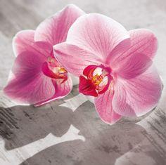 EUROGRAPHICS Glasbild »Transparent Beauty« pink Jetzt bestellen unter: https://moebel.ladendirekt.de/dekoration/bilder-und-rahmen/bilder/?uid=aed77d93-51b5-58b4-855e-820dcf7b3f3f&utm_source=pinterest&utm_medium=pin&utm_campaign=boards #glasbild #bilder #rahmen #dekoration