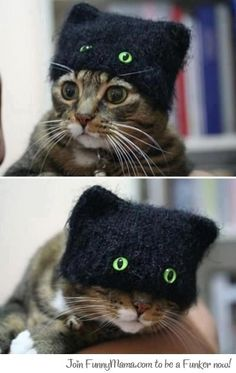 Green Eyed Cat Beanie - cause every cat needs a cat hat Cute Kittens, Cats And Kittens, Cats In Hats, Derpy Cats, Ragdoll Kittens, Cool Cats, I Love Cats, Funny Cats, Funny Animals