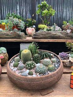 Cactus Y Suculentas, Zen, Succulents, Flowers, Shop, Small Gardens, Cactus Plants, Garden, Home