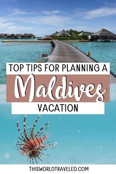 The top Maldives travel tips for planning your trip to paradise. Continue reading this information packed guide filled with useful tips including how to travel around the islands, the top things to do in the Maldives and more! maldives| maldives trip | maldives travel guide | maldives photography | maldives travel | maldives island Maldives Vacation, Maldives Resort, The Maldives, Solo Travel, Travel Tips, Travel Destinations, Travel Guides, Beautiful Vacation Spots, Beaches In The World