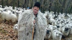 The ballad of the Romanian shepherd. Shepherds have a special place in Romania's history and in its culture, and their lifestyle has not changed much in centuries - until now. Social media has turned at least one of them into a celebrity