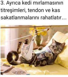 Kedi Mırıltısının İnsan Sağlı Üzerindeki 11 İlginç Etkisi