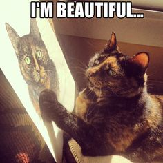 "Sudden realization... ""I'm beautiful..."" Yes, she is a beautiful tortie!"