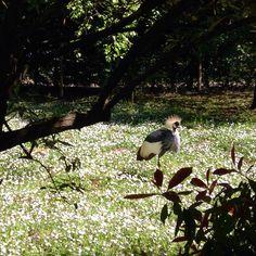 teste coronate   #zoo #puntaverde #gru #natura #famiglia #gita