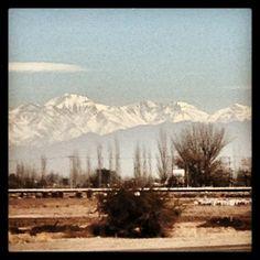 Provincia: Mendoza Departamento: Luján de Cuyo Distrito: Perdriel – Zona Alta del Río Mendoza. Altitud: 960 m.s.n.m. Sistema de conducción: Espaldera alta y Parral.