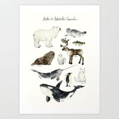 Buy Arctic & Antarctic Animals Art Print by amyhamilton. Worldwide shipping available at Society6.com. Just one of millions of high quality products available.