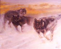 Midnight wolves800x600.jpg
