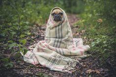 El primo perruno de E.T.