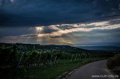 Beautiful pic of Rheinhessen vineyards!  © 2011 Rheinhessenwein e.V., all rights reserved