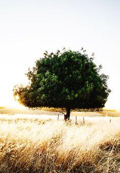 Limited Edition Tree Blaze Photographic Print