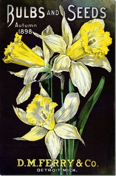 D. M. Ferry 1898 Autumn cover of daffodil bulbs