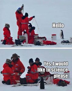 Science and penguins