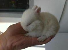 baby bunny aww