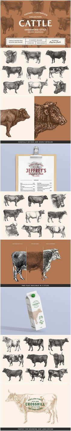 A collection of engraving-style graphics of cattle breeds restored from 19th and early 20th-century books and catalogs.This set contains 27 vintage illustrations of cows and bulls. All graphics have been carefully restored, refined and vectorized. Perfect for a wide variety of projects, for example, logos and branding for cattle breeders, farmers, beef and dairy producers, food packaging design, restaurant branding and stationery, decoupage and scrapbooking. Texture Images, Food Packaging Design, Retro Logos, Restaurant Branding, Vintage Illustrations, Cows, Cattle, Farmers, Collages