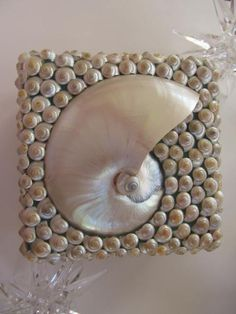 Pearl Nautilus and Umbonium Shell Beach by PinkPelicanDesigns, $82.00
