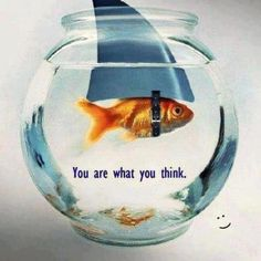 You are what you think!D big fish in a small tank! lol :D Think Big, What You Think, Funny Animal Pictures, Funny Animals, Adorable Animals, Quote Pictures, Random Pictures, Animal Pics, Positive Self Talk