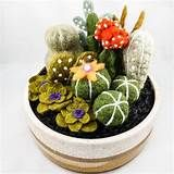 needle felted succulents - Yahoo Image Search Results