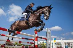 马, 车手, 表演跳跃, 跳, 阻挡, 体育