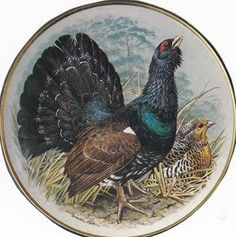 Image result for brooke bond capercaillie