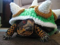 A Bowser Costume For Your Turtle...lol, seriously, the turtle is on a power trip, look at his face!   Livin' the dream, man, just livin' the dream!