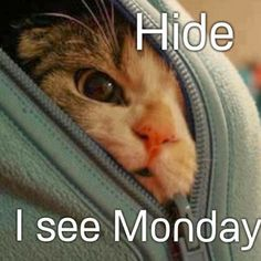 I Can Has Cheezburger? - Lolcats n Funny Pictures - funny pictures - Cheezburger Decir No, Monday Monday, Monday Morning Humor, Sunday Humor, Happy Monday, Manic Monday, Monday Blues, Morning Quotes, Monday Sayings