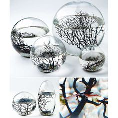 EcoSphere.   I can handle a pet like this