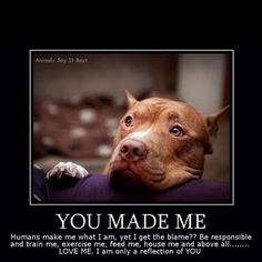 Pitbulls- THIS is the truth! Pitbulls AREN'T mean dogs, they are if you MAKE THEM! If you TRAIN them to mean, they will be. I have a pitbull and she'll kiss you to death, she's such a sweetheart. Love My Dog, Puppy Love, Happy Puppy, Happy Dogs, All Dogs, Best Dogs, Dogs And Puppies, Doggies, Dalmatian Puppies