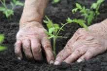 Jak střídat plodiny na zahradě | JakTak.cz Image