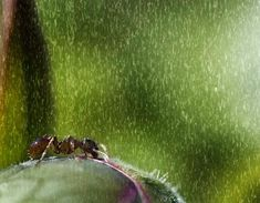 :: Alexandra Proaño 3D - Green Pear Diaries ::: Fotografía: Ese maravilloso mundo animal