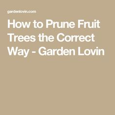 How to Prune Fruit Trees the Correct Way - Garden Lovin Prune Fruit, Pruning Fruit Trees, Gardening For Beginners, Gardening Tips, Permaculture, Things To Know, Organic Gardening, Backyard, Healthy