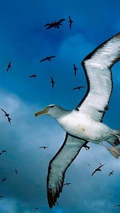 gulls, flock, sky, clouds, birds, sea