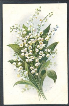 PJ091 Artist Signed Lily of The Valley Fine Litho | eBay