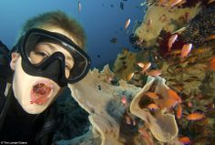 Open wide: Russell, who has been diving with his father for seven years, is unfazed by the dangers of holding his mouth open underwater whilst cleaner shrimp go in to clean out any food debris.