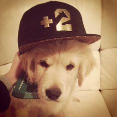 And if you don't know, know you know  #snapback #fashionkilla #puppy #dawg #mansbestfriend #hat #swag #style #fashion