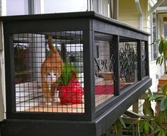 Serena the cat in her veranda enclosure